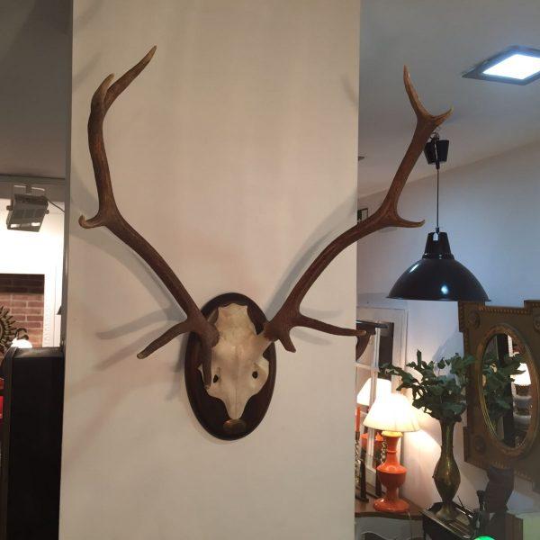 Trofeo de caza mayor original de 10 puntas certificado en for Trofeos caza decoracion